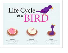 avian_life_cycle